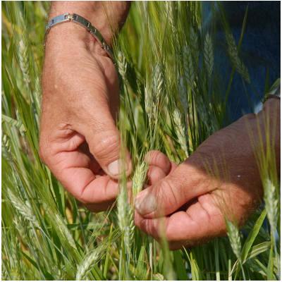 Une analyse des besoins en formation des salariés en groupements d'employeurs agricoles