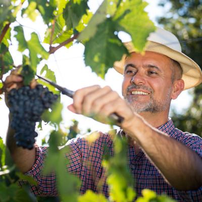 Portrait de la filière viti-vinicole girondine