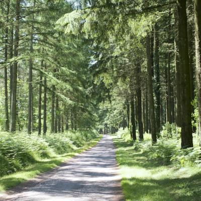 Vue d'ensemble sur la filière forêt-bois en Nouvelle-Aquitaine