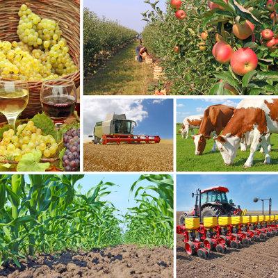 Contrat régional de filière pour l'orientation, la formation et l'emploi dans l'agriculture et les aménagements paysagers