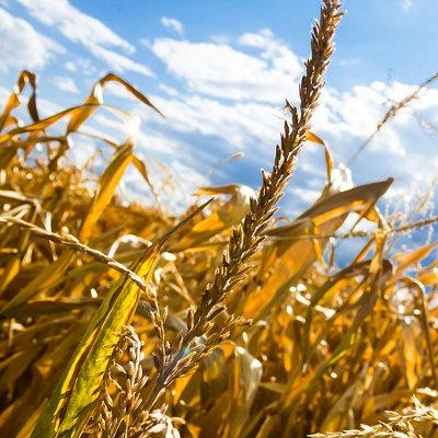 Edition 2019 du memento de la statistique agricole en Nouvelle-Aquitaine