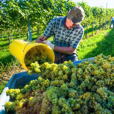 Les métiers de la vigne et la vie de château