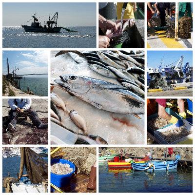 Un « Quai des métiers de la mer » à La Rochelle
