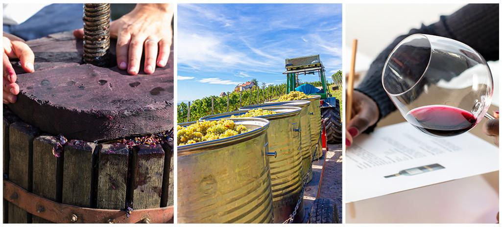 """Le 19/02 rendez-vous à Cap Métiers pour un """"Plein phare"""" sur les métiers de la vigne, du vin et de l'agriculture"""